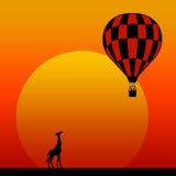 Safari encounter. Encounter between a giraffe and and a hot air balloon during an African safari Royalty Free Stock Photography