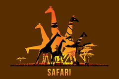 Safari et faune Image stock