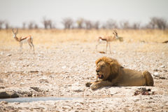 Safari Etosha stockfotos
