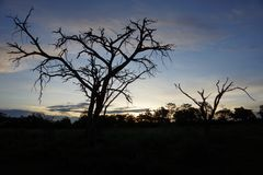 Safari in the evening. A tree in the savannah Stock Photos
