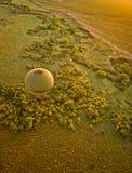Safari för luftballong i Afrika över deltan arkivfoto