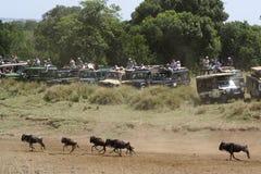 Safari-Fahrzeuge an der großen Systemumstellung, Kenia Lizenzfreie Stockfotos