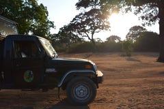 Safari fotográfico Parque nacional de Yala Sri Lanka Imagens de Stock Royalty Free