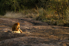 Safari-Höhepunkt. Lizenzfreies Stockfoto