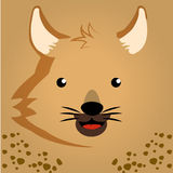 Safari Stock Photos