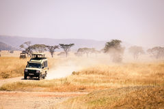 Safari i Serengetien Royaltyfri Bild