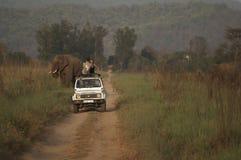 On Safari in India stock image