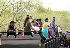 Safari jeep in zone 4 of Ranthambore park. RANTHAMBORE, INDIA-JUNE 24: People eagerly waiting for tiger sighting in Safari jeep during game drive in Ranthambore royalty free stock photo