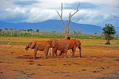 safari kenya Stock Photo