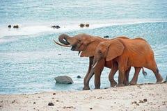 Safari kenya Stock Photo