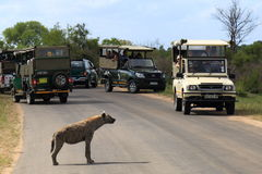 Safari in Kruger National Park Stock Photo