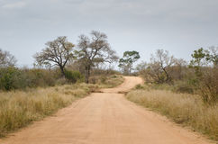 Safari Kruger National Park, Suráfrica Fotos de archivo libres de regalías
