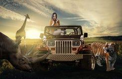 Safari: kvinna i jeepen som upptäcker den lösa naturen Royaltyfria Bilder