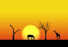 Safari landscape Stock Image
