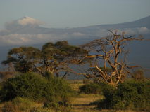 Safari Landscape. In Kenya with a tree in the foreground and mountains in the background Stock Photos