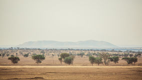Safari Landscape Royalty Free Stock Image