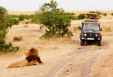 Safari with lions, Africa Stock Photo