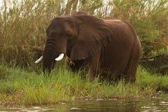 Safari Mana Pools stockfoto