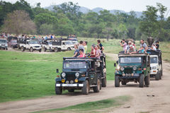 Safari. Many off-road jeeps with visitors. Minneriya. Sri Lanka. stock photography