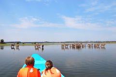 Safari, Naivasha Lake, Kenya Stock Photo