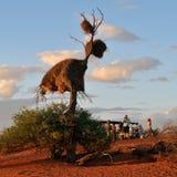 Safari in Namibia, Africa Stock Photo