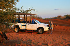 Safari in Namibia, Africa Stock Photography