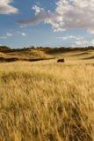 Safari in Namibia Royalty Free Stock Photography