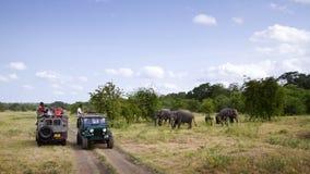 Safari in Nationalpark Minneriya, Sri Lanka Stockfotos