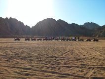 Safari nel deserto Immagine Stock