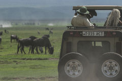 Safari in Nogorongoro Crater Royalty Free Stock Images