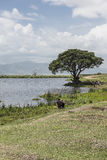 Safari in Nogorongoro Crater Stock Image
