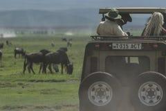 Safari in Nogorongoro-Krater royalty-vrije stock afbeeldingen