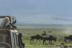 Safari in Nogorongoro-Krater stock afbeelding