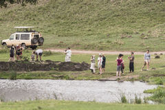 Safari in Nogorongoro-Krater royalty-vrije stock foto