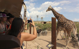 A Safari at Out of Africa Wildlife Park Stock Photography