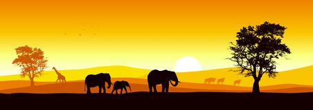 Safari panorámico