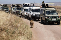 Safari parade Stock Image