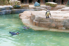 Safari park penguin enclosure Stock Photography