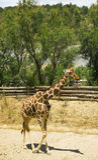 Safari park Reserve Africaine de Sigean Stock Photography