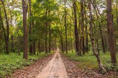 Safari path in dudhua Royalty Free Stock Photo