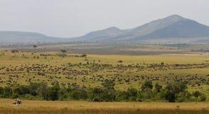 Safari pendant le transfert grand images stock
