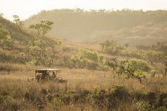 Safari pojazdu jeżdżenie przez trawy fotografia royalty free