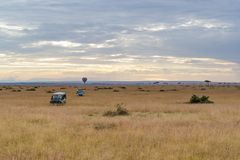Safari pojazdy W Otwartym Kenja polu Obrazy Stock