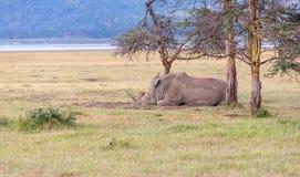 Safari - rhino Stock Photo