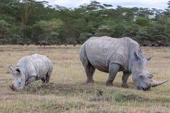 Safari - rinoceronti Fotografia Stock Libera da Diritti