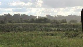 Safari salvaje Tanzania Rwanda Botswana Kenia de la sabana de los pictrures africanos del verano almacen de metraje de vídeo