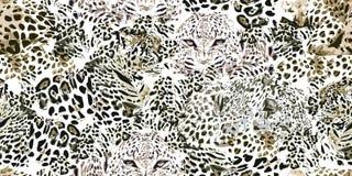 Safari sen Grunge tło z lampartów punktami Obrazy Stock