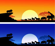 Safari silhouette Royalty Free Stock Photography