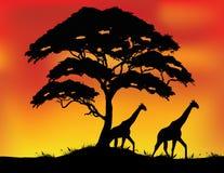 Safari Silhouette Background Stock Images
