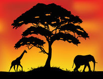 Safari silhouette background Royalty Free Stock Photography